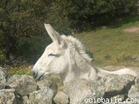 web_198. El burro de Alberto apareció por estos lugares